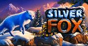 Silver-Fox